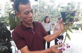 Vườn lan nhiều loại siêu độc ở Thái Nguyên, giá cả chục triệu 1cm