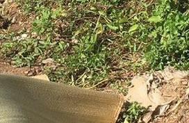 Thanh Hóa: Phát hiện nam thanh niên gục chết bên vệ đường