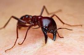 """Ăn cam xong đừng vội vứt vỏ đi, chỉ cần một ít vỏ bạn sẽ khiến đàn kiến """"khăn gói"""" kéo nhau ra khỏi nhà"""