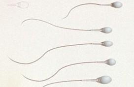 Sắp có thuốc tránh thai dành cho nam giới