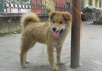 Tắm cho chó, 2 vợ chồng bị điện giật chết thương tâm ở Thái Bình