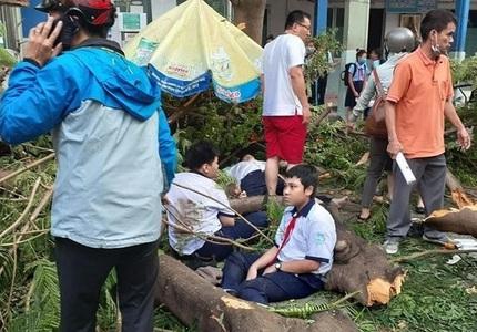 """Hà Nội rà soát, """"thăm khám"""" và xử lý những cây xanh nguy cơ mất an toàn trong các trường học"""