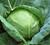 """4 loại rau là """"thần dược"""" chống ung thư, người Việt chớ coi thường"""