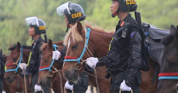 Giống ngựa của Đoàn CSCĐ kỵ binh diễu hành có đặc điểm gì nổi bật