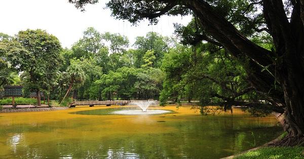 Hà Nội: Mặt hồ Bách Thảo bỗng biến đổi sang màu vàng cực kỳ lạ mắt