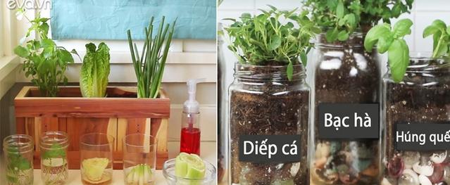 Nhà không vườn, không ban công vẫn tha hồ hái rau sạch nhờ cách trồng này