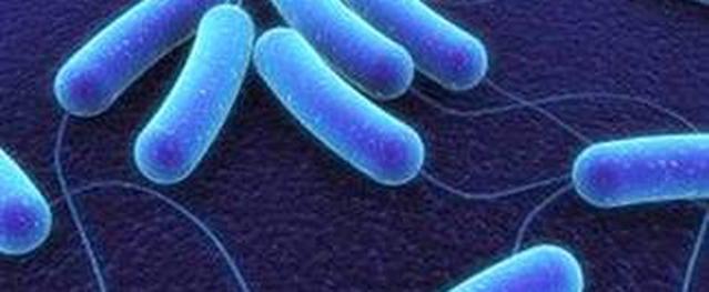 Biểu hiện tiêu chảy do vi khuẩn tả