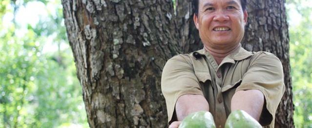 Cụ cây 'vàng ròng': Mỗi năm cho trăm quả, thu về trăm triệu