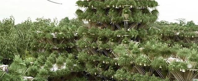 Không cần chiếc ốc vít nào, ngôi nhà cây hoành tráng này vẫn kiên cố đến kinh ngạc