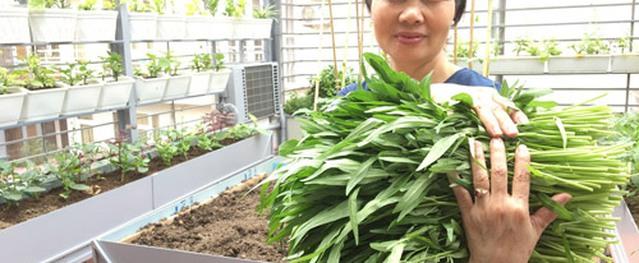 Tôi suýt phá vườn vì bỏ ra chục triệu mà không có rau ăn
