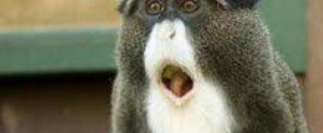 Lý do bất ngờ khiến con khỉ có bộ râu bạc trắng được nhiều người tìm mọi cách để mua