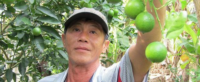 Cụ ông kiếm hơn 1 tỷ mỗi năm nhờ vườn chanh giấy trứng ngỗng