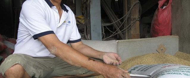 Chủ nhà máy xay xát gạo đồng ý giao 3 cây vàng quên trong bao lúa cho địa phương giữ