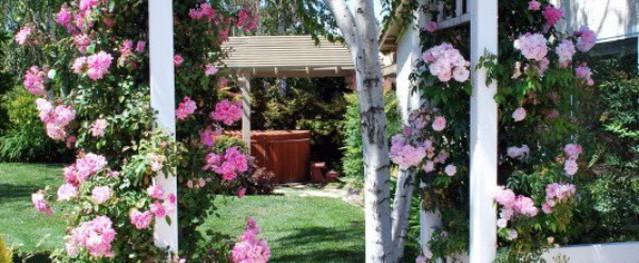 Nếu nhà có cổng, bạn hãy làm nó trở nên ngọt ngào nhờ những loài hoa leo này
