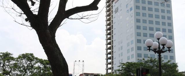 Hải Phòng: Nhiều cây cổ thụ