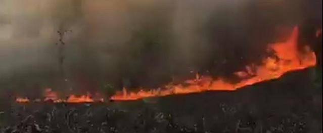 Nắng nóng đổ lửa, cháy rừng liên tiếp ở Thừa Thiên Huế