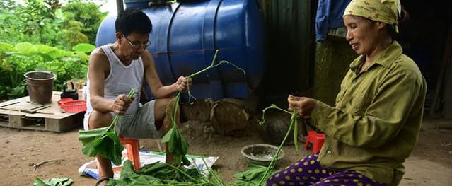 """Cặp chị em trồng rau bí, bỏ túi tiền triệu mỗi ngày ở """"đảo hoang"""" giữa Thủ đô"""
