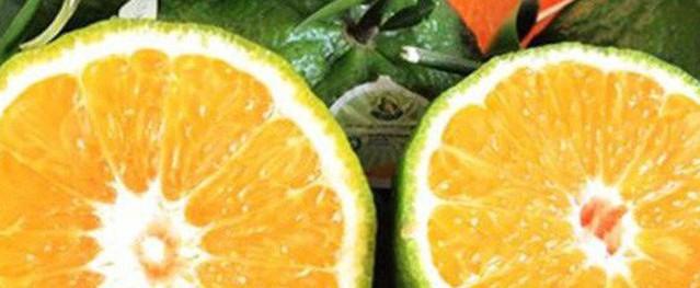 Điểm mặt những loại trái cây không hạt đang gây sốt trên thị trường