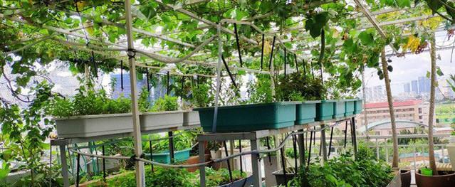 """Khu vườn sân thượng không khác gì một """"trang trại thu nhỏ"""" ở TP. HCM"""