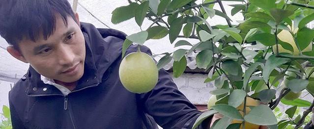 Từ 'kẻ trốn nợ' đến triệu phú trồng chanh