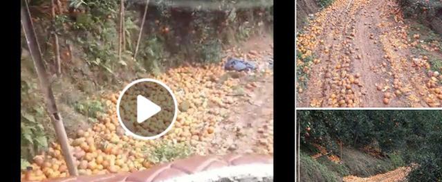 Hàng tấn cam Hà Giang thất thủ rơi xuống đầy đường, cộng đồng mạng chung tay kêu gọi giải cứu