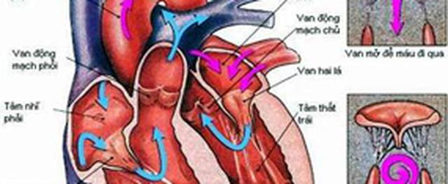 Nghiên cứu dự báo nguy cơ tim mạch