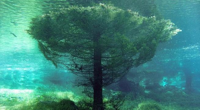 Cận cảnh khu rừng dưới nước đẹp như trong cổ tích