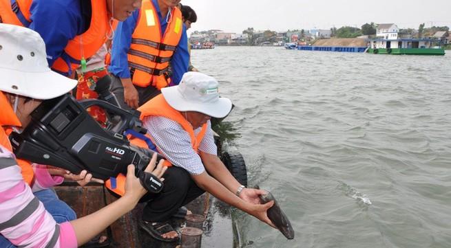 Thả cá quý hiếm ra sông