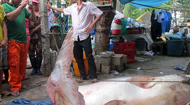 Người dân chen lấn xem cá tra dầu 200 kg