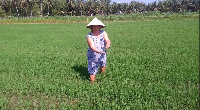 Vĩnh Long: Khốn khổ vì ruộng lúa bị rải đầy miểng chai