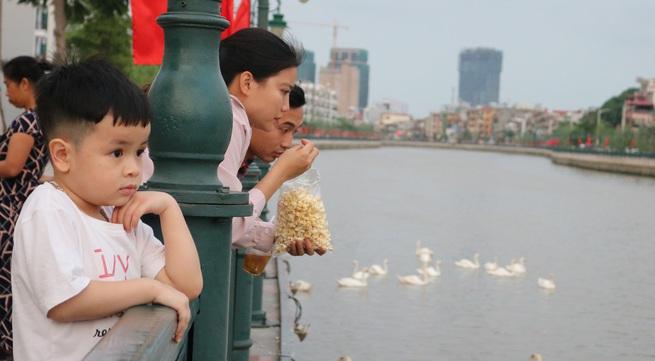 """Người Hải Phòng đổ về sông Tam Bạc ngắm đàn thiên nga """"nhập khẩu"""""""