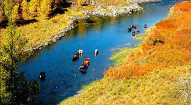 Đến thảo nguyên Mông Cổ nếm sữa chua ngựa