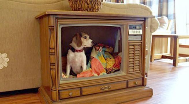 5 ý tưởng bất ngờ biến tivi cũ thành đồ dùng hữu dụng