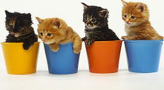 Những điều cần biết khi nuôi mèo