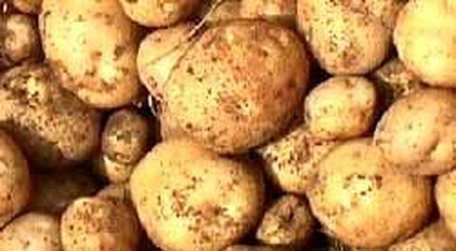 Làm mềm giày da bằng khoai tây