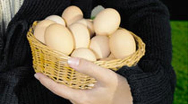 Ăn nhiều trứng hại sức khỏe?
