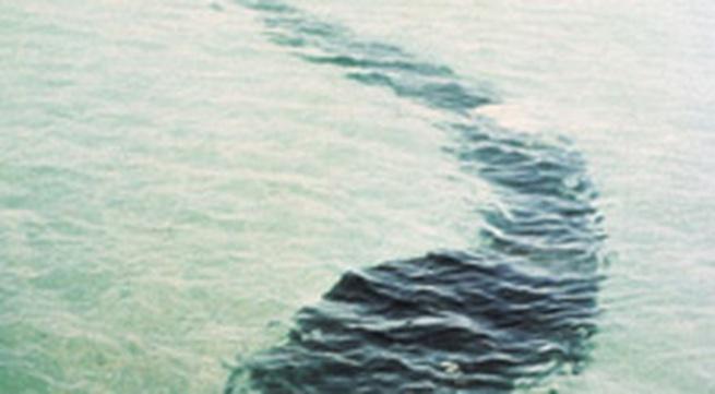 Hải quân Pháp đụng độ quái vật khổng lồ biển Cát Bà