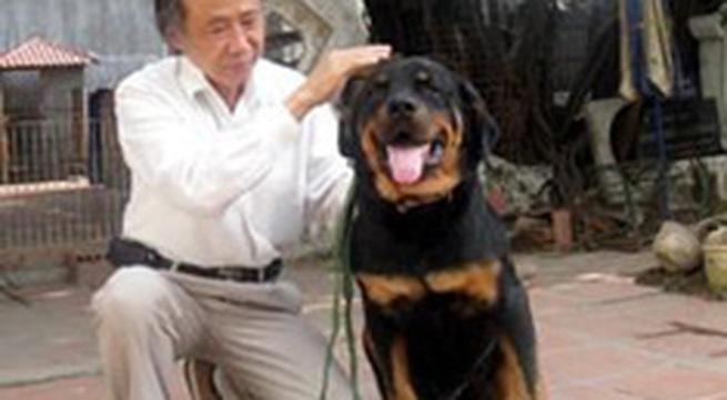 Sẽ có hội chọi chó đầu tiên tại Hà Nội