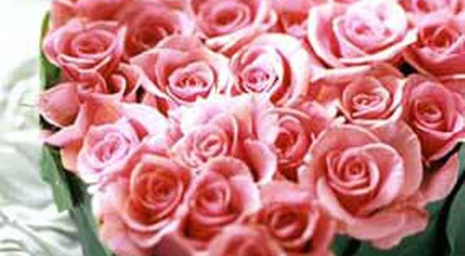 Cắm và bó hoa hồng cho ngày Valentine