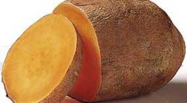 Mẹo chọn, chế biến và bảo quản khoai lang