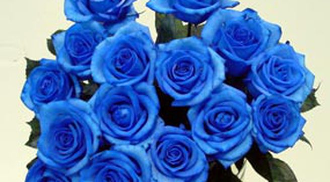 Hoa hồng màu xanh nước biển