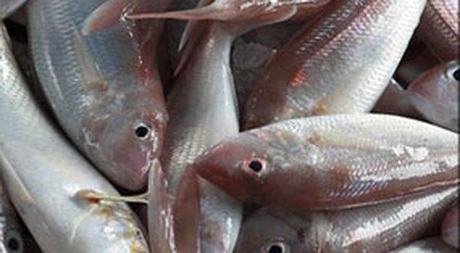 Mẹo phân biệt cá tươi