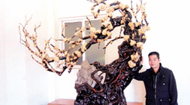 Kiếm tiền tỷ từ những gốc cây chết