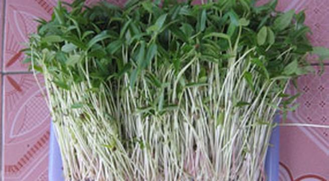 Tự trồng rau mầm tại nhà, tại sao không?
