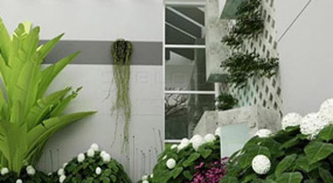 Bài trí cây xanh trong nhà theo phong thủy