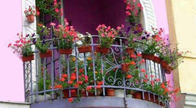 6 bước tự trồng hoa trên ban công
