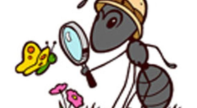Truyện cười: Kiến đi tìm quần