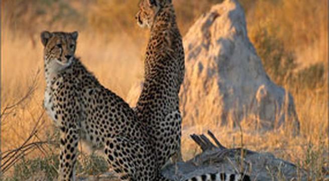 Tận mắt ngắm động vật hoang dã ở châu Phi