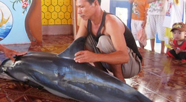 Cá voi nặng gần 100kg dạt vào bờ