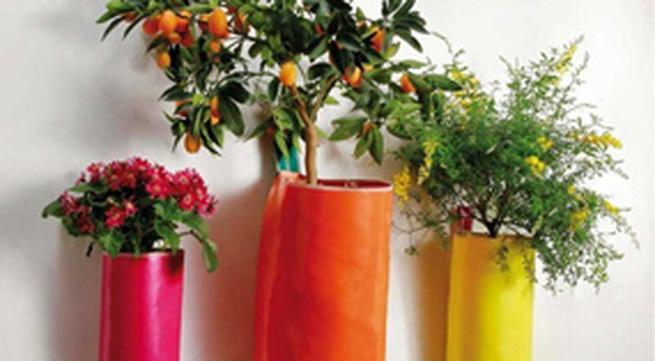 Bí quyết trồng cây trong nhà